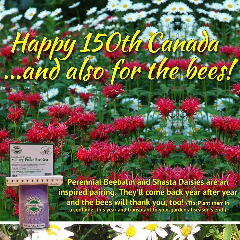 Canada 150 Red and White flowering for bees.