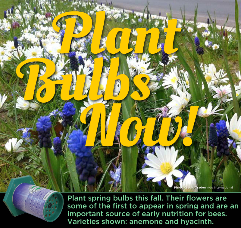 Plant Bulbs Now