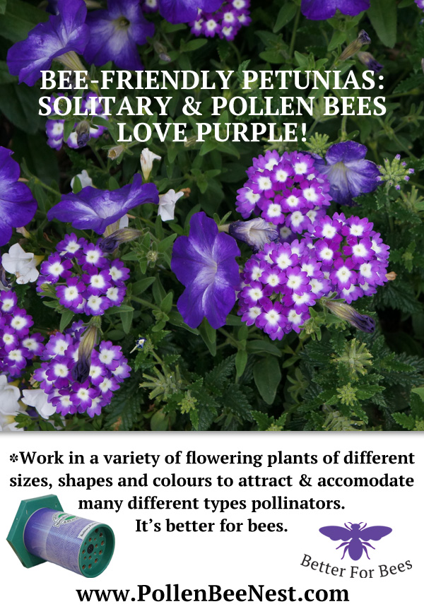 Purple-Petunias For Pollen Bees