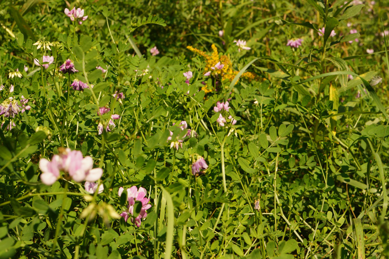 Wildflowers For Pollen Bees